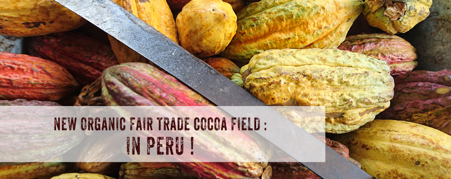 New organic fair trade cocoa field in Peru