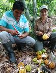 cacao bio equitable perou
